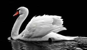 swan-2107052__340