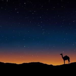 camel-163703__340